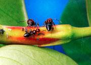 Ants' life