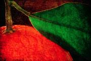 Mandarine  ♥
