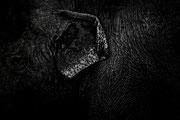 Texture éléphantesque