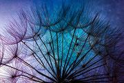 Aigretttes en bleu