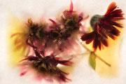 Fleurs gelées 1