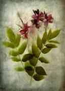 Dernières fleurs de la saison  ♥