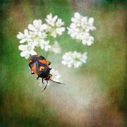 Bug !  ♥