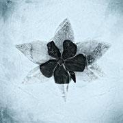 L'étoile du froid  ♥