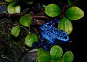 Bleu mortel