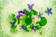 Glace à la violette  ♥