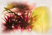 Fleurs gelées 2