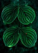 Composition en vert  ♥