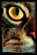 Opale Œil de Chat