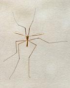 Mosquito ?  ♥