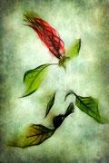 Vert & Rouge  ♥