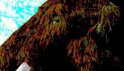 Mammutkopf