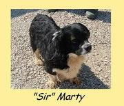 """""""Sir"""" MARTY"""