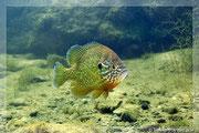 Unterwasserfotos Meer, Unterwasserfotos Fische, Unterwasserfotos von Heinz Toperczer