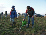 Pflanzung der Feldholzinsel am Hinkelstein