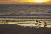 Golden Beach, Pastel on Pastelmat, 40x60cm, 2012