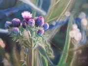 Distel, Pastel, 50x70cm, 2014, Private Collection