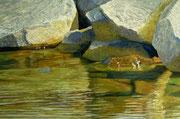 Steine im Wasser II, Pastel on Pastelcard, 40x60cm, 2011