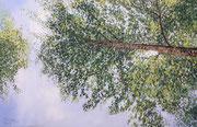 Birke, Pastell, 40x60cm, 2019