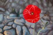 Red Poppy, Pastel on Pastelmat, 40x60cm, 2013