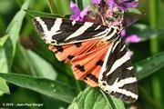 Écaille martre (papillon nocturne)