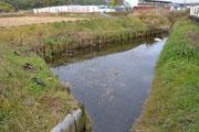②ビオトープ 水のよどみ場所で藻が繁殖しこれを餌に場に野鳥が飛来してきます。