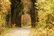 Herbstimpressionen im Höhragen Foto: Leo Wyden