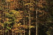 Bunter Herbst Foto: Leo Wyden