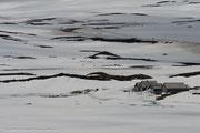 Das Hochplateau entstand in den Eiszeiten.