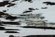 In der Hardangervidda herrscht Arktisches Klima.