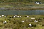 Isle of Mull - Innere Hebriden