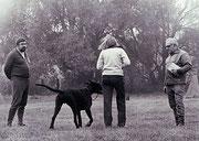Dallas bei der Schutzhund-Ausbildung