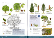 "Sachunterricht, ""Bäume bei uns""  ©Cornelsen"