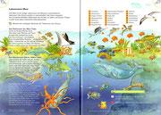"""Sachunterricht, """"Lebensraum Meer"""" ©Cornelsen"""