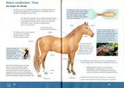 """Sachunterricht, """"Der Köper des Pferdes"""" ©Cornelsen"""