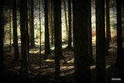 Unterholz ...