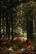 Wirrwarr im Unterholz ...