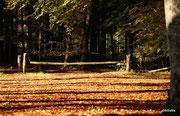 Herbstwald ...