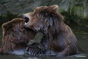 Bärenliebe ...