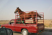 Transport in Qatar