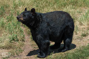 Brown - Bearpark - South Dakota - 2016
