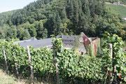 Kloster Marienthal/ob Frühling ,Herbst oder Winter hier können sie die besten Weine Trinken.Weingut Meyer-Näke/Genossenschaft Mayschoß/Weingut Brogsitter/Weinmanufaktur Dagernova