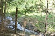 Die Umgebung von Dernau hat viele schöne Plätze . Nicht nur Weinberge . Wäder mit kleinen Bächen,Pilze sammeln im Herbst oder abschalten und das grün des Waldes von einem Stressigen Arbeitstag auf sich wirken lassen .