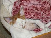 """Auch Katzen lieben Kuschelhöhlen - Frauchen sagt:""""Alonzo schön eingewickelt fühlt sich mega wohl"""" :)"""