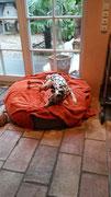 Charly - Windhundpullover mit Snood (Beige mit Muster)