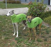 Enrico & Lynn im Partnerlook :-) **** Windhundpullover mit Snood - Erbse ****
