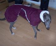 Greyhound Hündin Breeze im Auberginefarbenden Wintermantel (Aussen Polarfleece/Innen Nerz-Optik)
