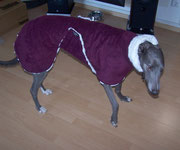 Greyhound Hündin Breeze im Auberginefarbenden Wintermantel (Aussen Polarfleece/Innen Nerz-Optik)