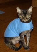 Yoda - Pullover mit Kragen (Auch Katzen finden das toll :-))