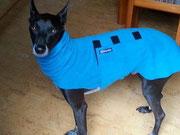 Wind (Hund) Pullover mit Snood in der Farbe Eisblau